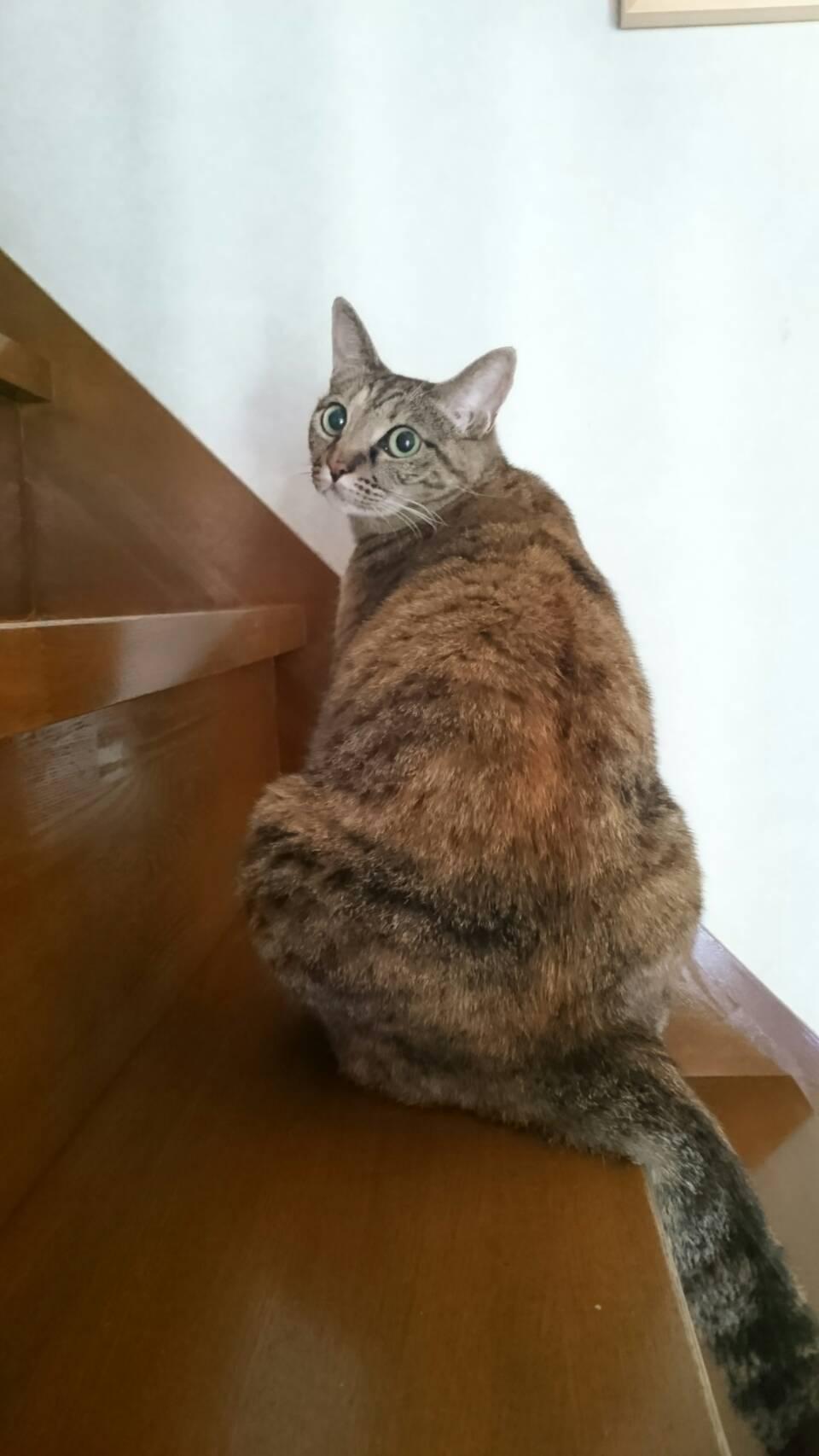 階段がお気に入りの美和さん宅のQちゃん✨