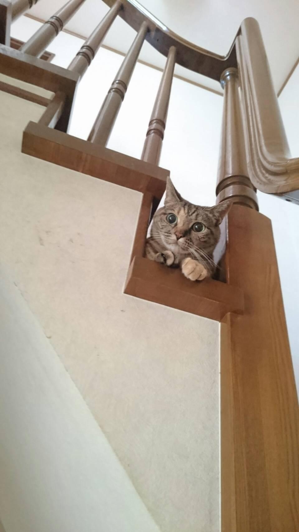 最近は階段がお気に入りのQちゃん✨❤✨