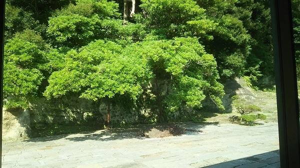 中庭の緑陰