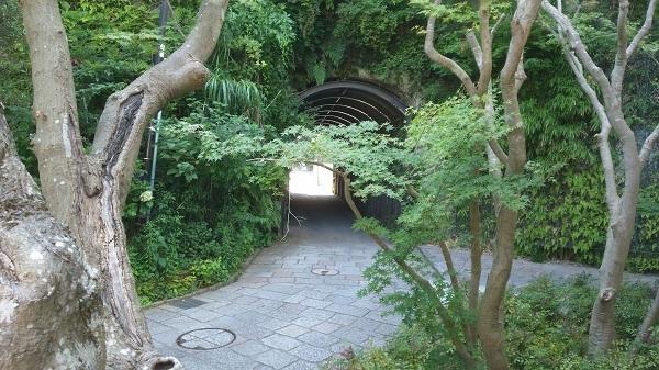 緑の木々とトンネル