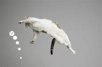 猫ジャンプ_LI