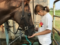 20180803 夏九に向けて馬の写真_180803_0004