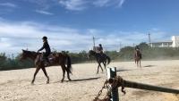20180803 夏九に向けて馬の写真_180803_0014