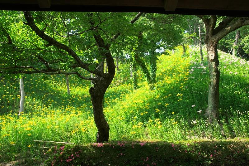 可睡 ゆりの園 3