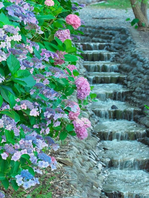 紫陽花が咲く頃