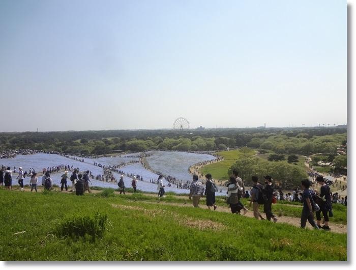 常陸海浜公園DSC01447