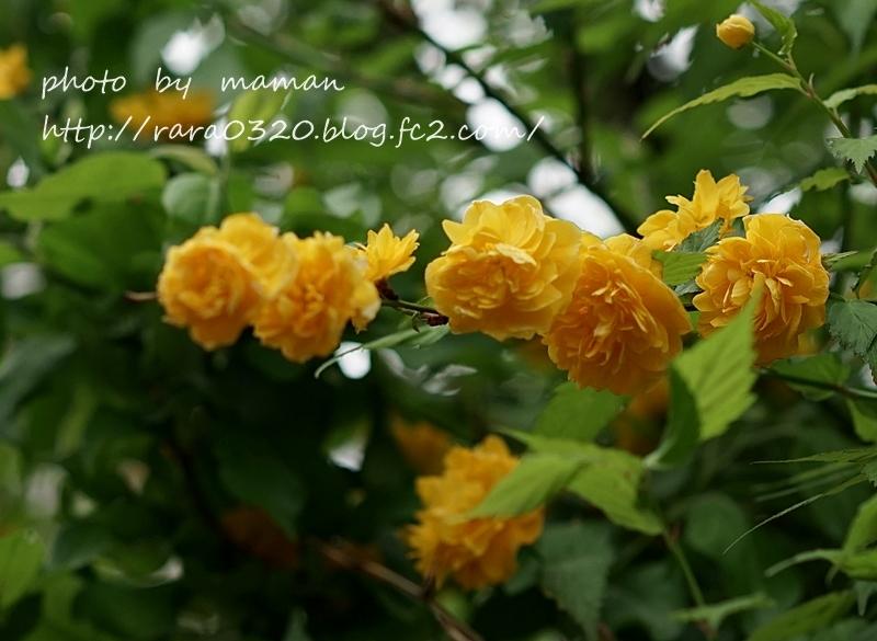 DSC04148 bbbbbbbb