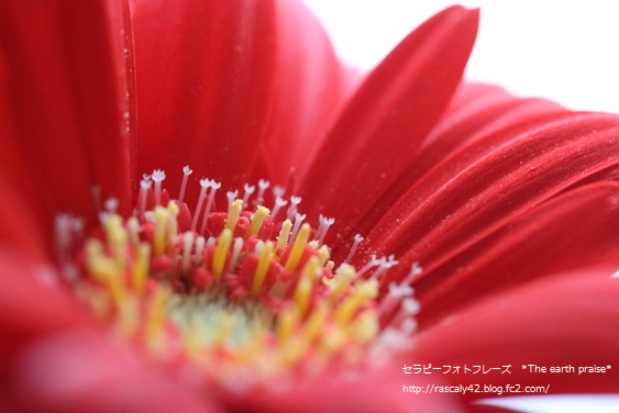 Photo therapy628 花は愛で咲く