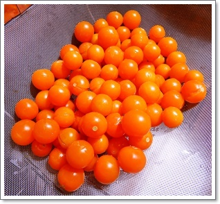 ミニトマトも毎日収穫