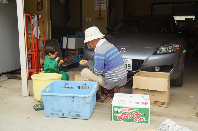蔕をとる孫と祖父