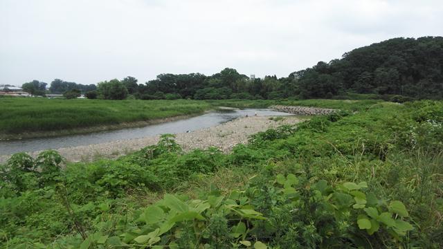 秋川の高月城あたりの釣り人 鮎狙い