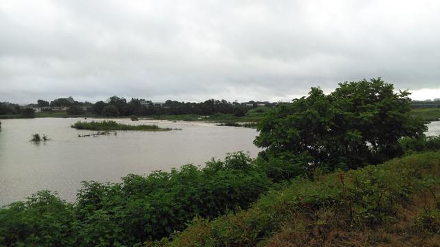 どんぶらこっこな多摩川