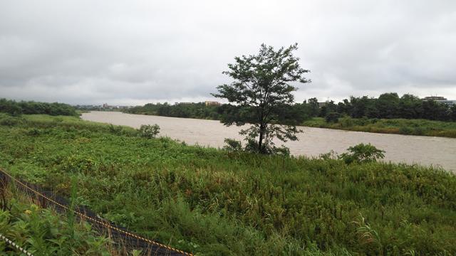 水が沢山多摩川