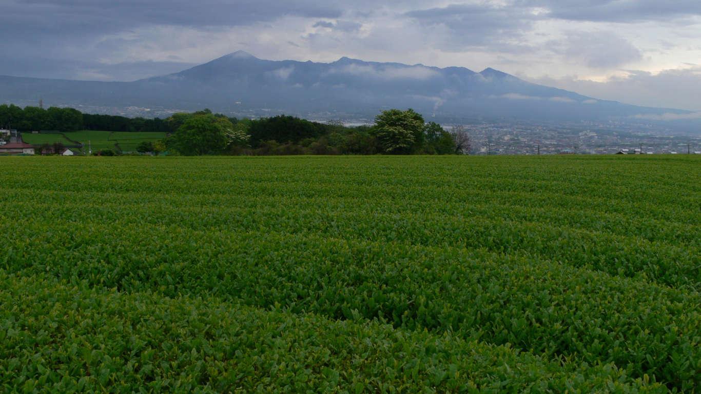 090508岩本山001