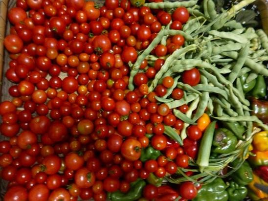 トマト20180807