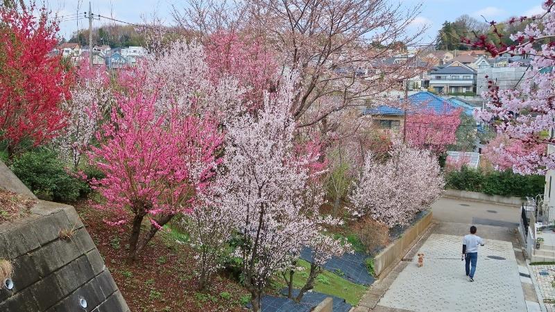 1020180324元石川高校そば (800x449)
