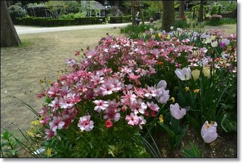 ガーデンパークDSC_0226-20180414