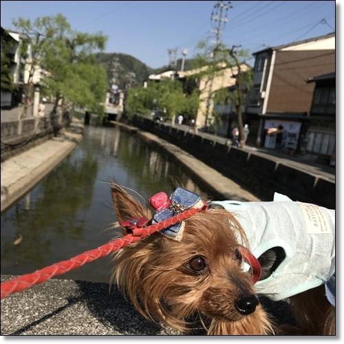 姫路IMG_4850-20180424