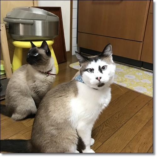 姫路IMG_4868-20180424