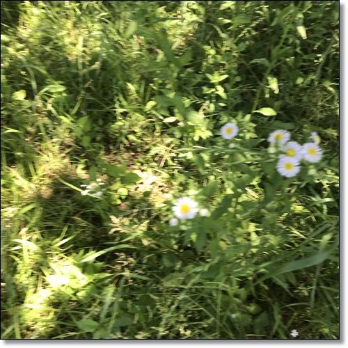 散歩IMG_5134-20180522