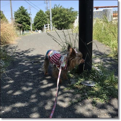 散歩IMG_5139-20180522
