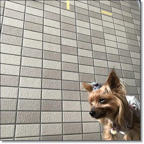 工事中なりIMG_5216-20180529
