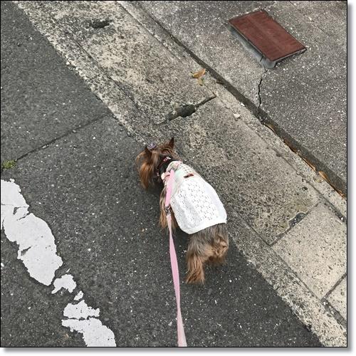 工事中なりIMG_5209-20180529