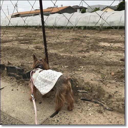 工事中なりIMG_5211-20180529