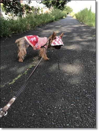 散歩IMG_5716-20180724