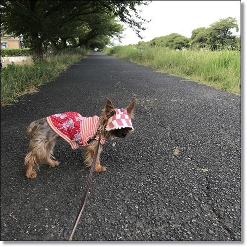 散歩IMG_5727-20180724