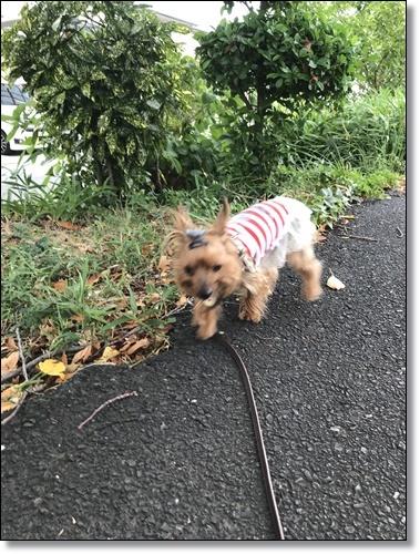 散歩IMG_5810-20180807