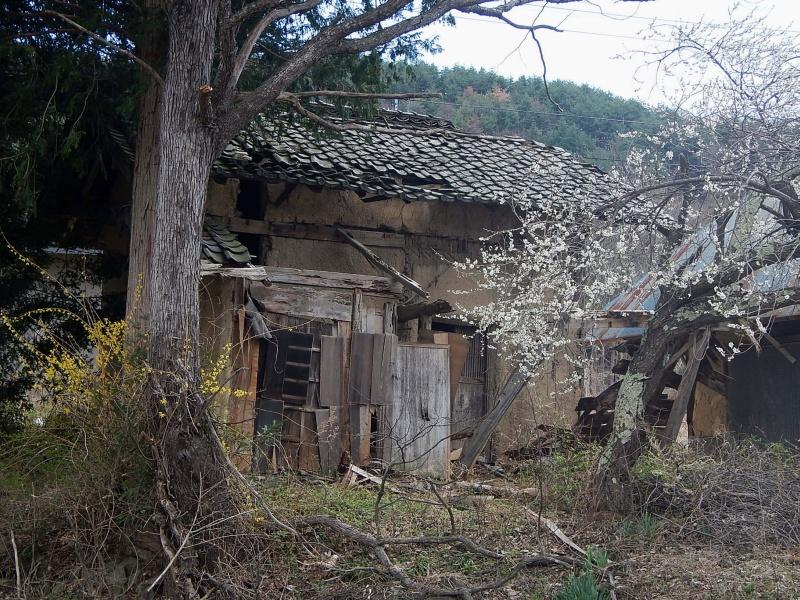 1804_fukujusou