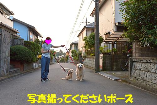 DSC_4467-500px.jpg