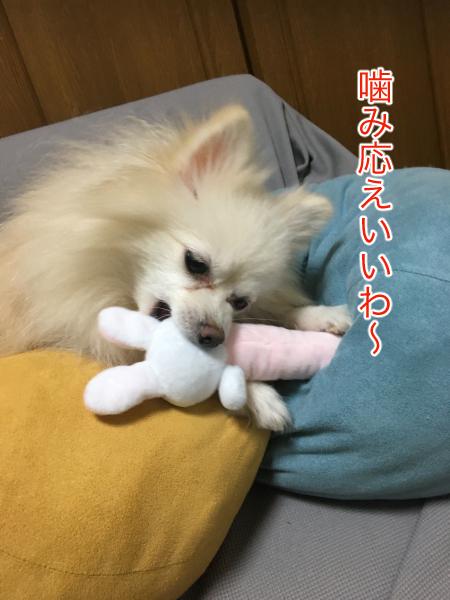 IMG_0740blog.jpg