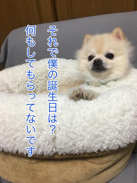 IMG_0974blog.jpg