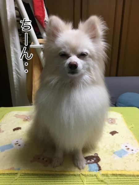 IMG_1034blog.jpg
