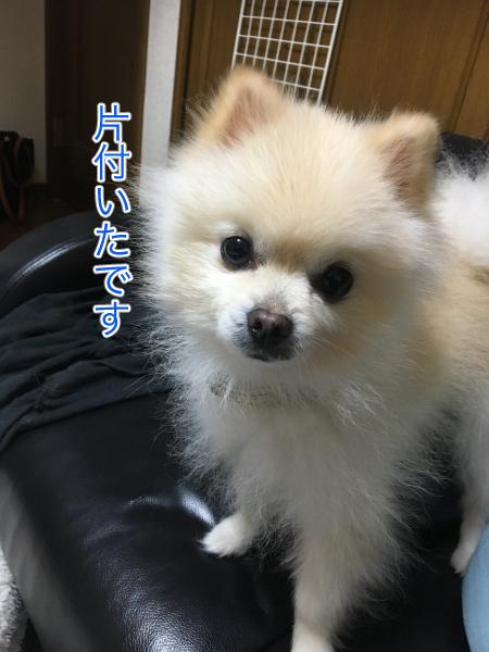 IMG_1057blog.jpg