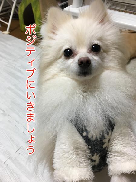 IMG_1114blog.jpg
