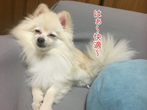 IMG_9829blog.jpg