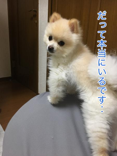IMG_9908blog.jpg