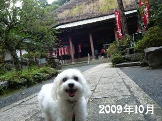 20091003hiyakusi1.jpg