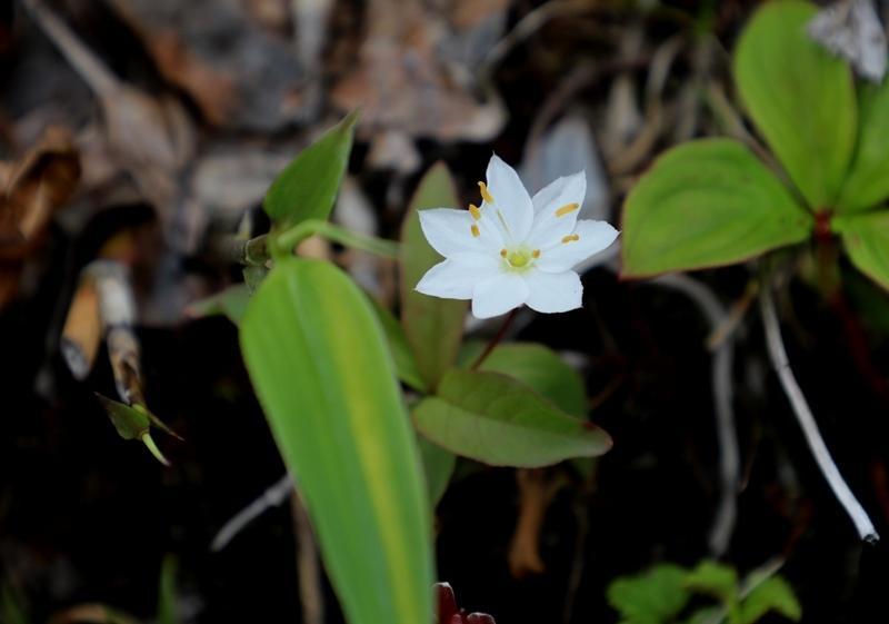 高山植物2180712