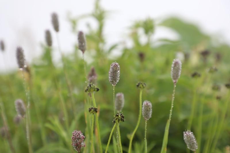 高山植物6180713