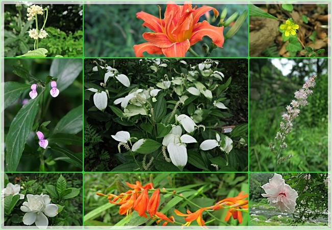 渓谷沿いの花