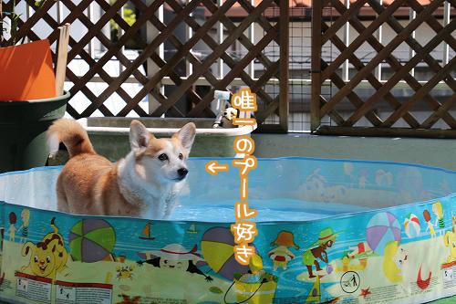 まりちゃんはプール好き