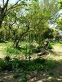 P1050227 ガーデン15