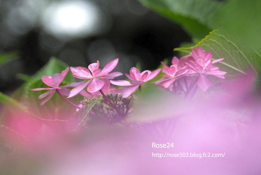 Pb66170086.jpg