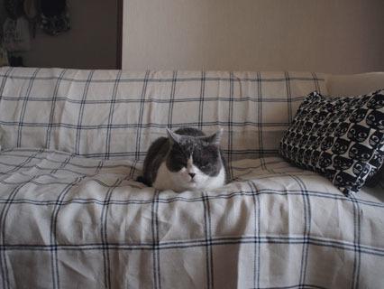 ぼくのソファだから
