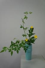 傾斜型そけい黄中菊