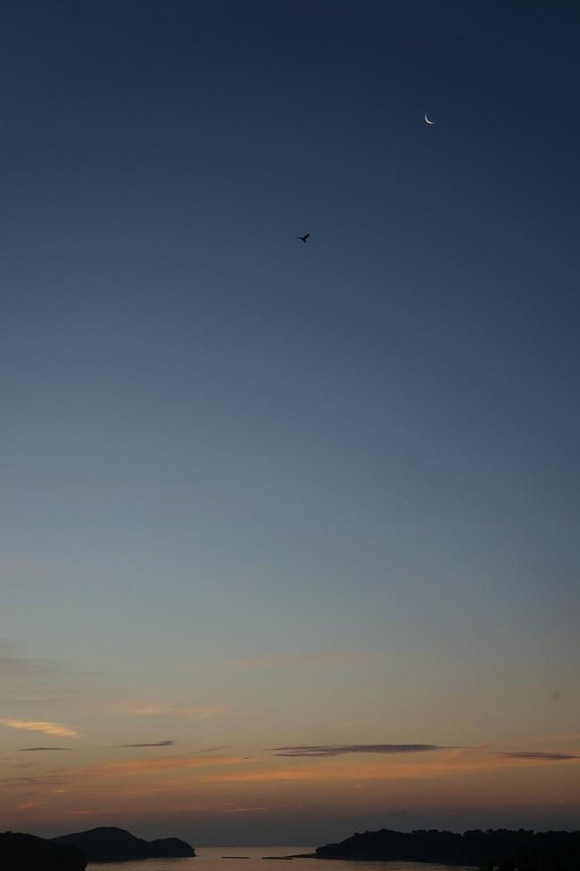月とカラス1